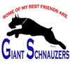 some of my best <br>friends are giant schnauzers