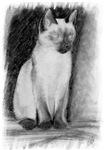 Pencil Drawing - Cat