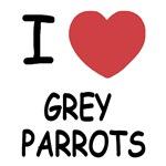 I heart grey parrots