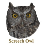 Screech Owl with Name