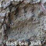 Real Bear Track