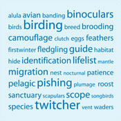 Birding Tag Cloud