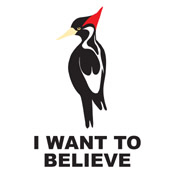 Ivory-billed: I Want to Believe