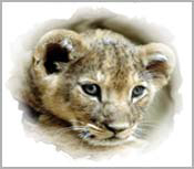LION GIFTS FOR LION LOVERS