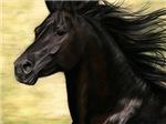 Cadence - Black Stallion
