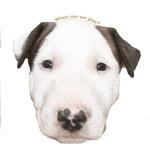 Miniature Bull Terrier Puppy