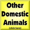 OTHER DOMESTIC ANIMALS