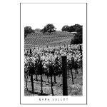 Napa Valley Black + White Posters
