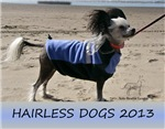 2013 Hairless Dogs Calendar