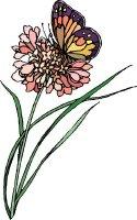 Butterfly Fields 3