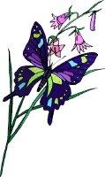 Butterfly Fields 5