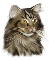 Maine Coon Gifts