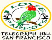 Wild Parrots | Telegraph Hill Gifts