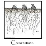 Crowcuses