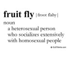Fruit fly definition