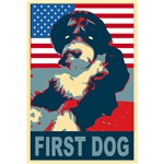 BO First Dog!  Portuguese Water Dog T-shirts