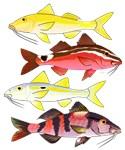Four Indo-Pacific Goatfish