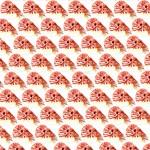 Chambered nautilus Pattern