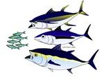 3 Tuna Attack