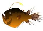 Deep Sea Anglerfish