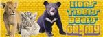 Lion, Tiger, Bear Cubs