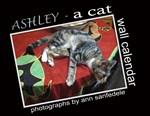 Ashley - a tabby cat - wall calendar , cards, etc.