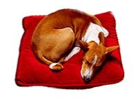 <B>CUTE & FUNNY DOG ART ILLUSTRATIONS</B>