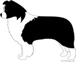 Border Collie - Plain