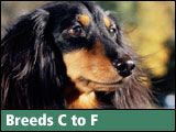 I (Heart) Dog Breeds C to F