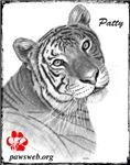 Tiger Rescue, PAWSWeb.org