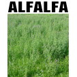 Alfalfa Store