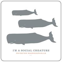 Social Creature