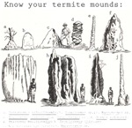 Know Your Termite Mounds