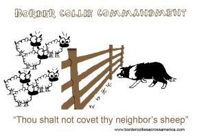 Border Collie Commandment