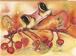 Red Tree Frog