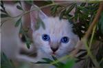 Kitten in the brush
