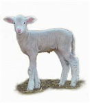 Single Lamb Profile