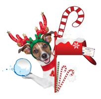Christmas Funny Dog with Snowball