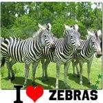 I LOVE ZEBRAS