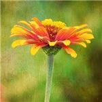A Single Bloom Color