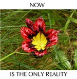 Now is the Only Reality