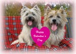 Valentines For Terrier-Lovers
