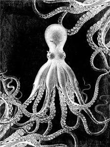 Vintage Octopus Dark