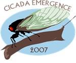 17 Year Cicadas 2007 T-shirts
