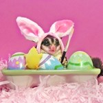 Easter #3