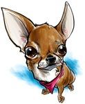 Lil' Chihuahua