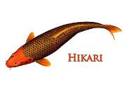 Hikari Pinecone