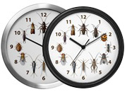 Common Household Pests Wall Clocks