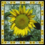 Sunflower with Border
