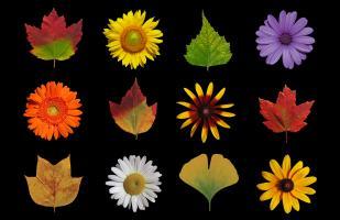 Flower & Leaf Journals, NoteCards, Prints